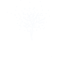 Illume by Paul Reynolds